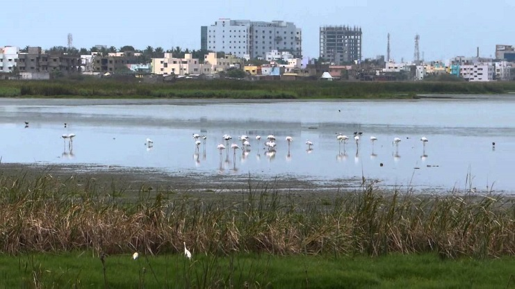 Pallikaranai Marshlands need Conservation Focus