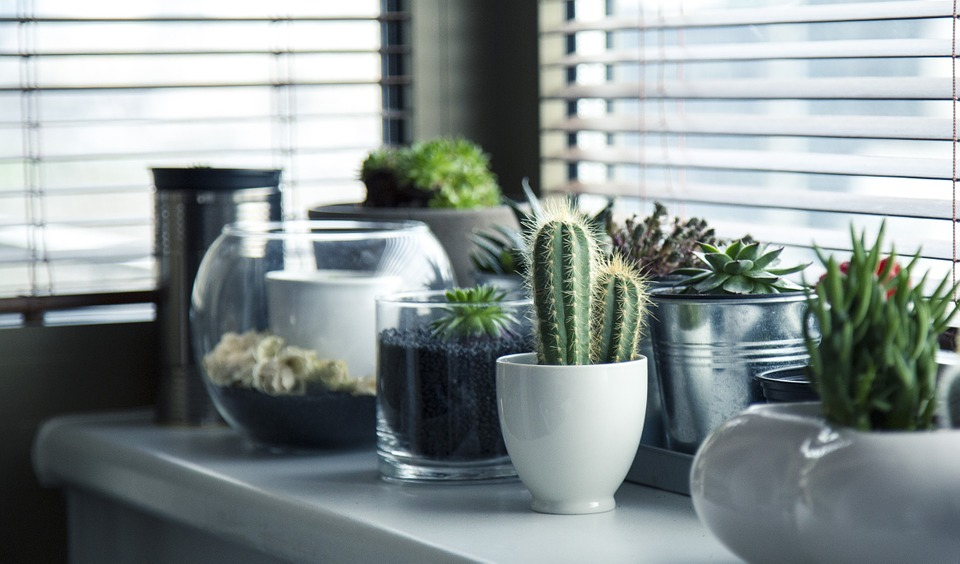 Why Home gardening should be practiced in every house!